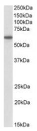 AP23702PU-N - CD80