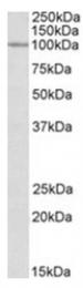 AP23737PU-N - CLCN2