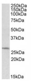 AP23734PU-N - DCUN1D1
