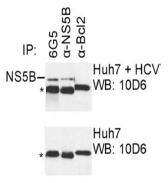 AM26119PU-N - HCV NS5B