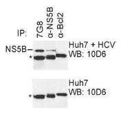 AM26120PU-N - HCV NS5B