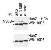AM26121PU-N - HCV NS5B