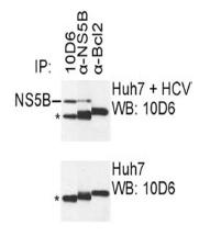 AM26123PU-N - HCV NS5B