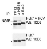 AM26125PU-N - HCV NS5B