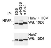 AM26126PU-N - HCV NS5B