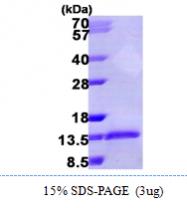 AR09959PU-L - MIP1 alpha / CCL3