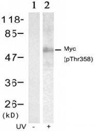 AP02336PU-S - c-Myc