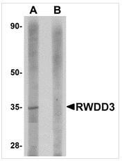 AP26330PU-N - RWDD3