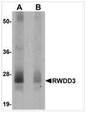 AP26331PU-N - RWDD3