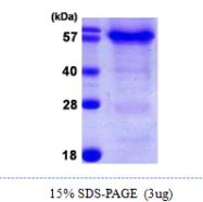 AR09991PU-N - HSPBAP1 / PASS1