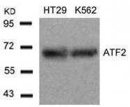 AP02573PU-N - ATF2