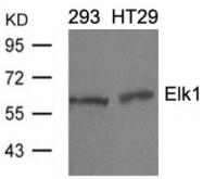 AP02579PU-S - ELK1