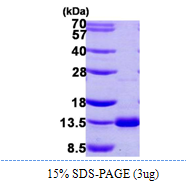 AR39005PU-L - DNAL4