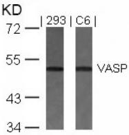 AP02717PU-S - VASP
