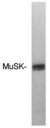 SP5180P - MUSK