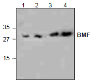 AP26342PU-N - BMF