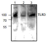 AP26346PU-N - CD283 / TLR3