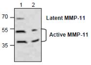 AP26350PU-N - MMP-11