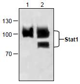 AP26340PU-N - STAT1