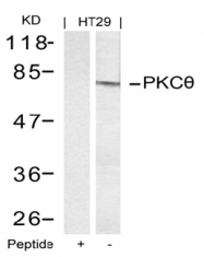 AP02699PU-S - PRKCQ / PRKCT