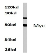 AP06238PU-N - c-Myc