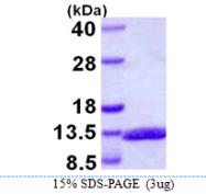 AR39079PU-L - Glucagon