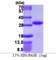 AR39088PU-L - RND1 / RHO6