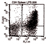 AM31878RP-N - CD80