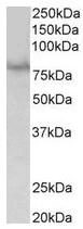 AP31682PU-N - SIM1