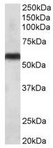 AP31688PU-N - CYP2C8