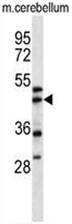 AP50073PU-N - Centractin alpha