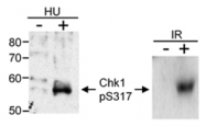 AP05719PU-N - CHK1