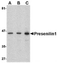 AP05739PU-N - Presenilin-1