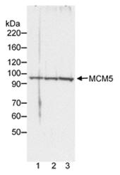 AP05750PU-N - MCM5