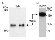 AP05753PU-N - MSH6