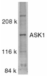 AP05790PU-N - MEKK5 / ASK1