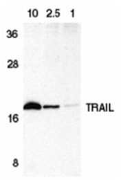 SP1177P - CD253 / TRAIL