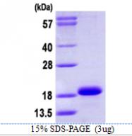 AR39120PU-L - Cytochrome b5
