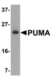 SP1410P - PUMA