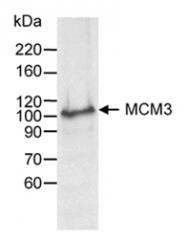 SP2049P - MCM3