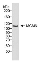 SP2108P - MCM6