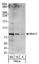SP2110P - MRE11