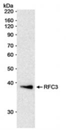 SP2068P - RFC3 / RFC38