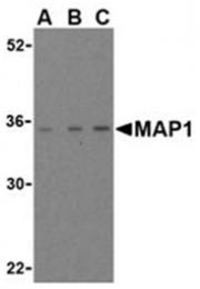 SP2153P - MOAP1
