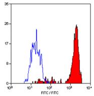 BM4008FX - Macrophage F4/80 antigen