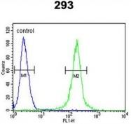 AP50161PU-N - Anti-Muellerian Hormone / AMH