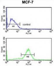 AP50192PU-N - Anoctamin-7 / ANO7