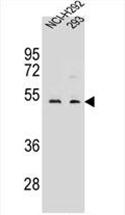 AP54556PU-N - WDR86
