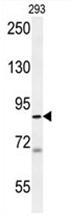 AP54546PU-N - WDR48 / p80