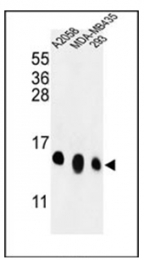 AP53718PU-N - RPL36